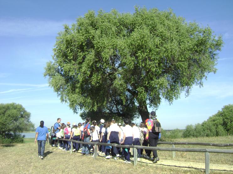 Excursión educativa a Sevilla (II)